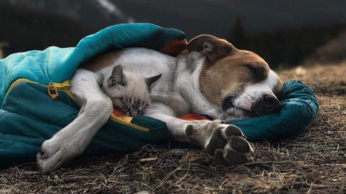 Дружба между собакой и котом - существует фото милых путешественников