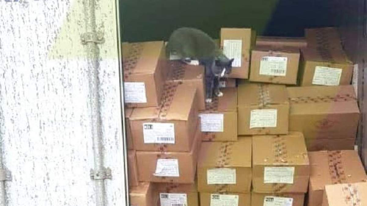 Кішка з Одеси 3 тижні пливла до Ізраїлю в контейнері з цукерками: фото