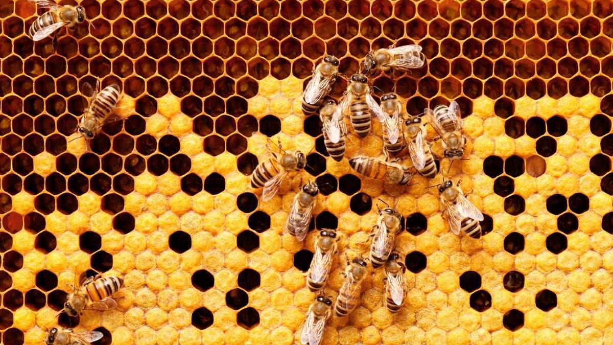 20 тисяч бджіл збудували вулик в офісі компанії, поки співробітники працювали віддалено: фото