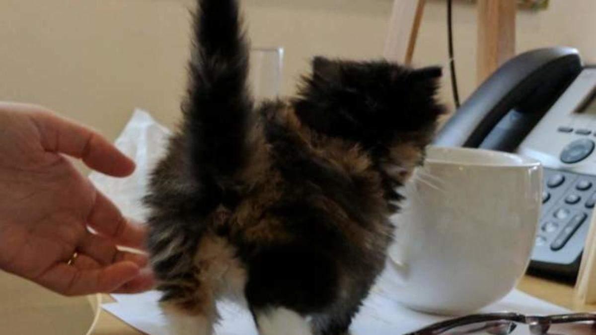 Жінка принесла кошеня на роботу: милі фото