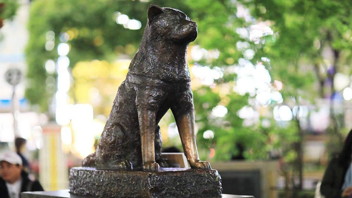 5 пам'ятників собакам з усього світу: фото