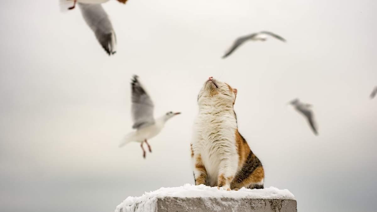 Полювала на чайок, а стала зіркою фейсбуку: мережу розсмішили фото кішки-невдахи з Одеси