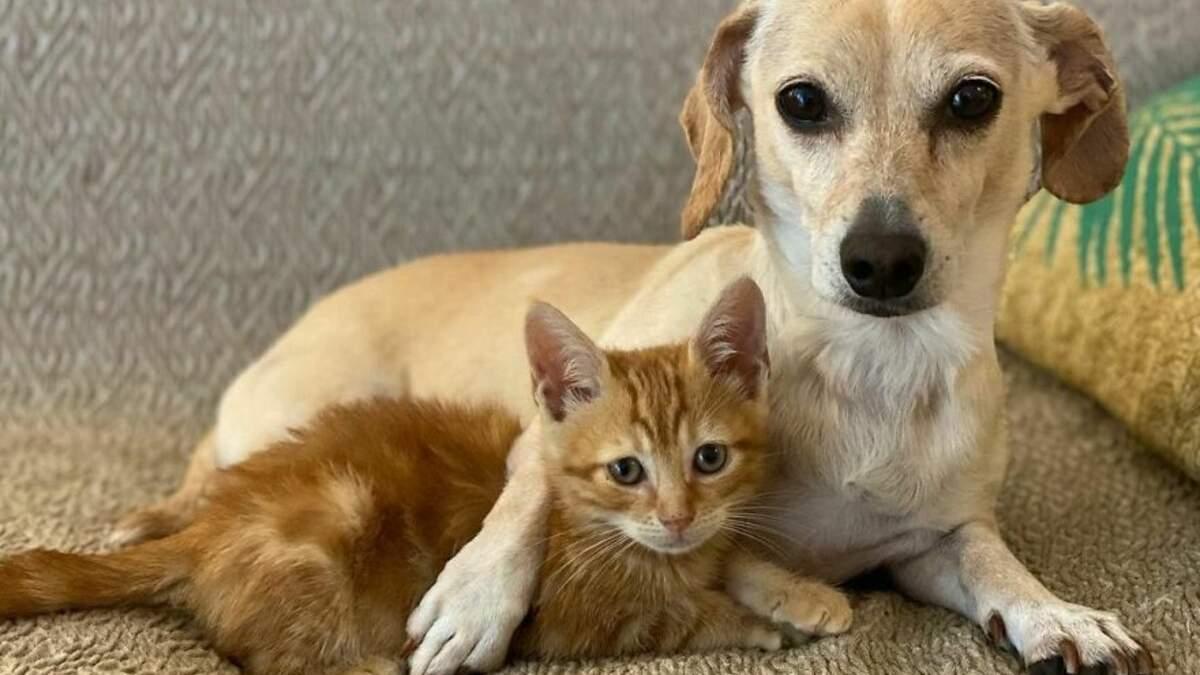 Собака воспитала более 160 котят: милые фото приемной мамы и ее детей
