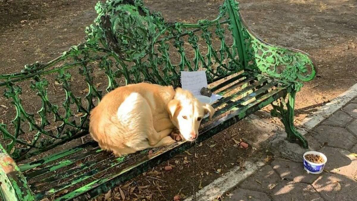 Батьки знущалися: дитина прив'язала своє цуценя до лавочки в парку – що з ним сталося