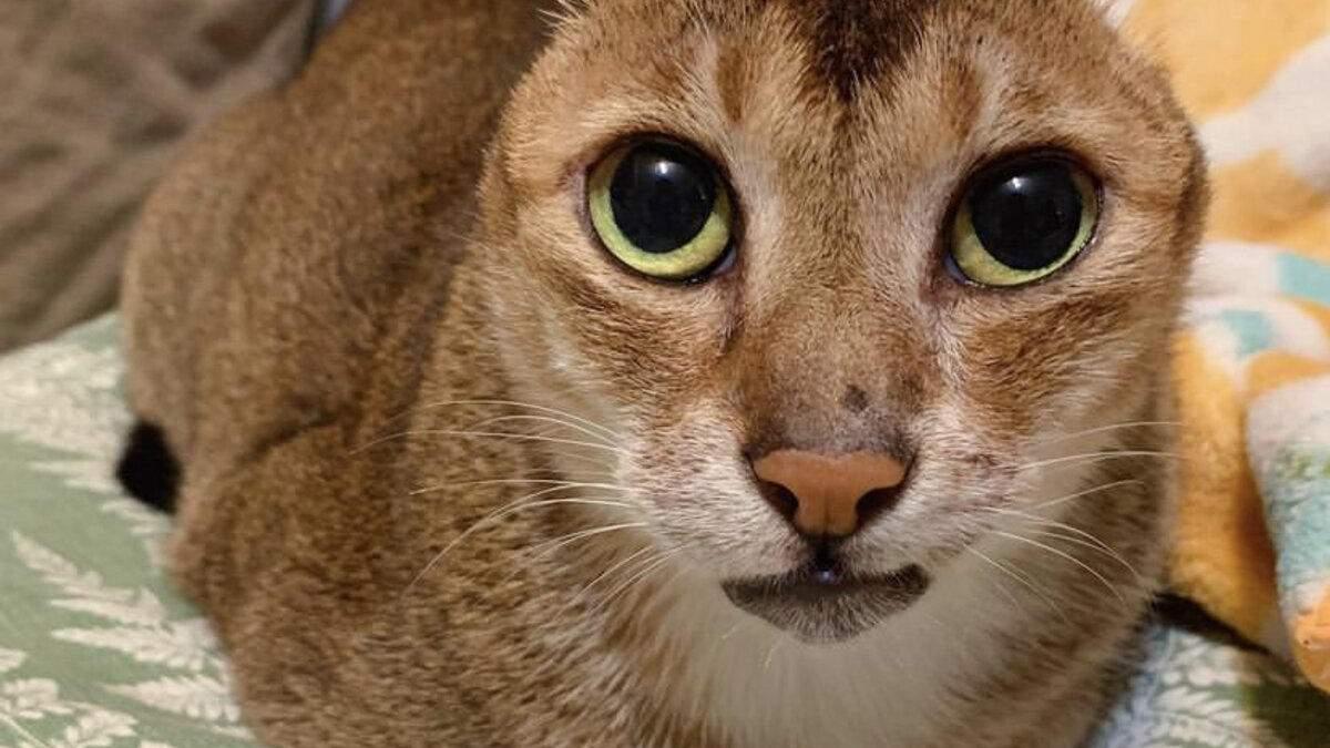 Кот потерял уши, но нашел семью и стал звездой интернета: история спасения