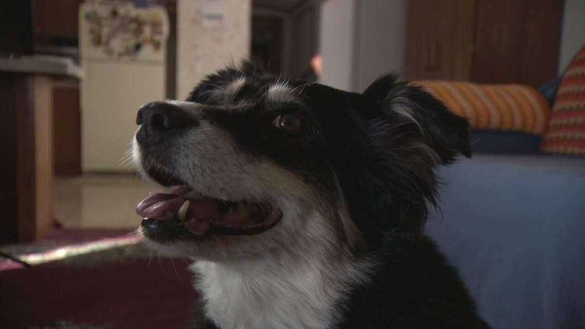 Собака унаследовала 5 миллионов долларов после смерти хозяина: поразительная история
