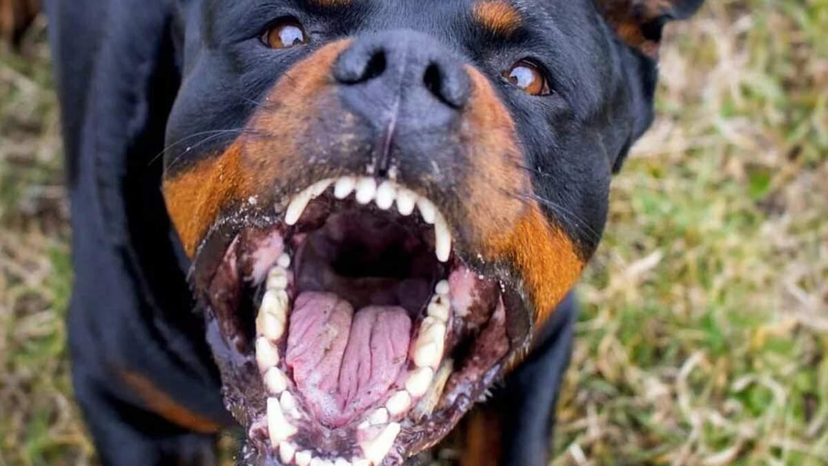 Ученые доказали, что марихуана успокаивает злых собак