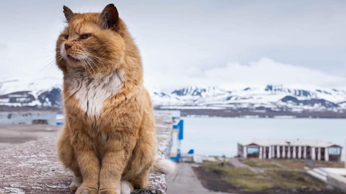 Помер знаменитий кіт-нелегал зі Шпіцбергену