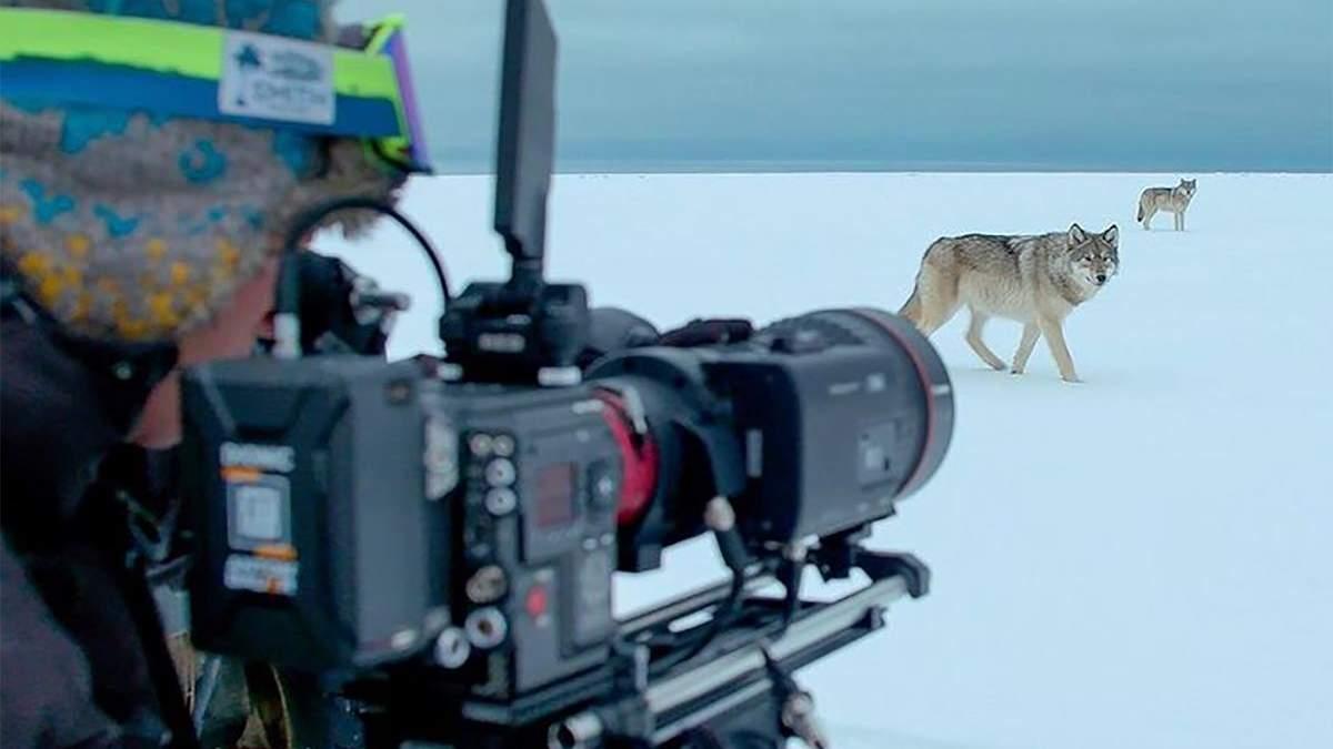Британський режисер дикої природи знімає неймовірні відео
