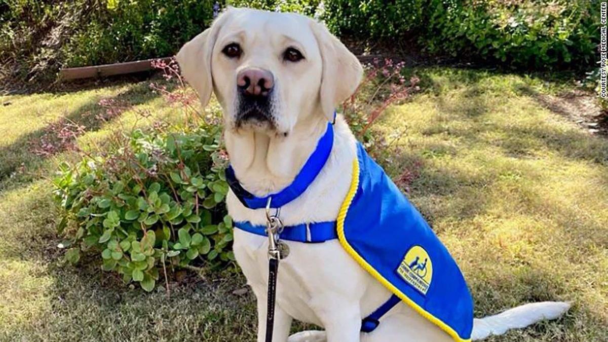 Как служебная собака помогала медикам преодолевать стресс: невероятная история