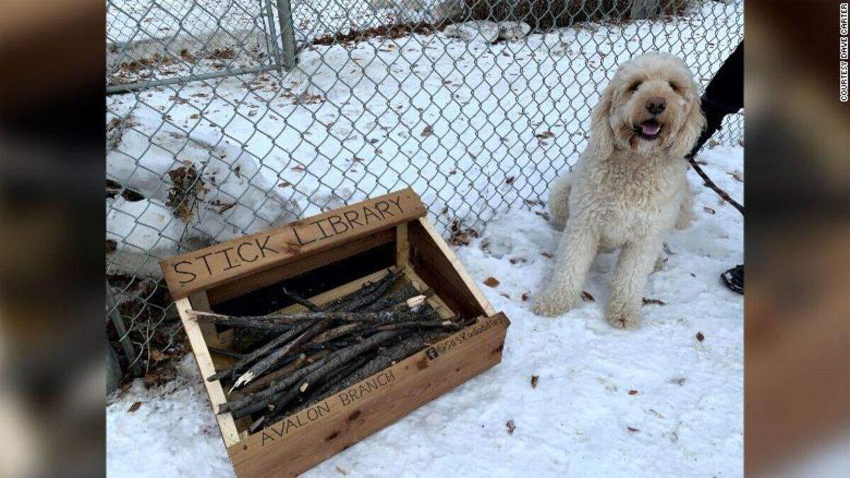 Библиотека палок: 10-летний парень придумал как развлечь собак