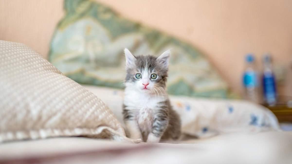 Как определить пол котенка: 5 эффективных методов с фото