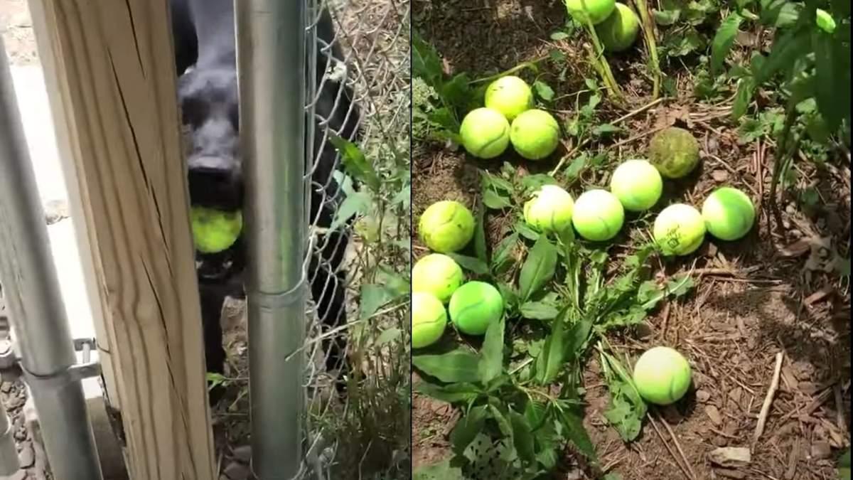 Собака из приюта придумала забавный способ развлекаться: милое видео покорило сеть