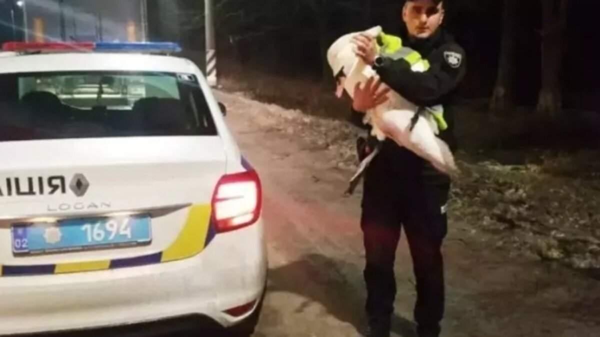 У Вінницькій області врятували лебедя