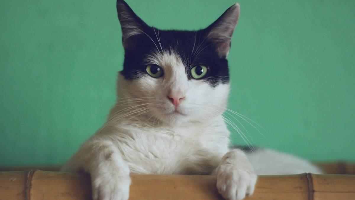 День кота: добірка популярних котів в інстаграмі