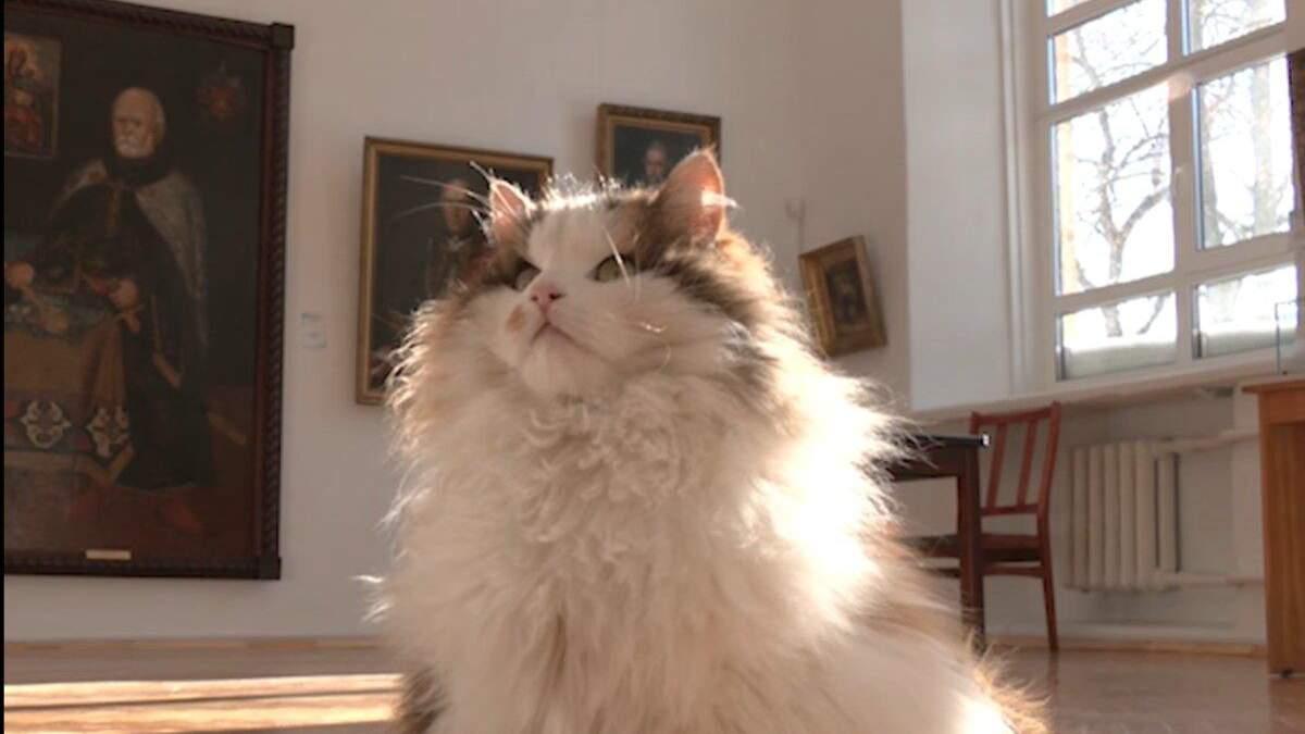 Какие коты живут в музеях Чернигова: интересное видео