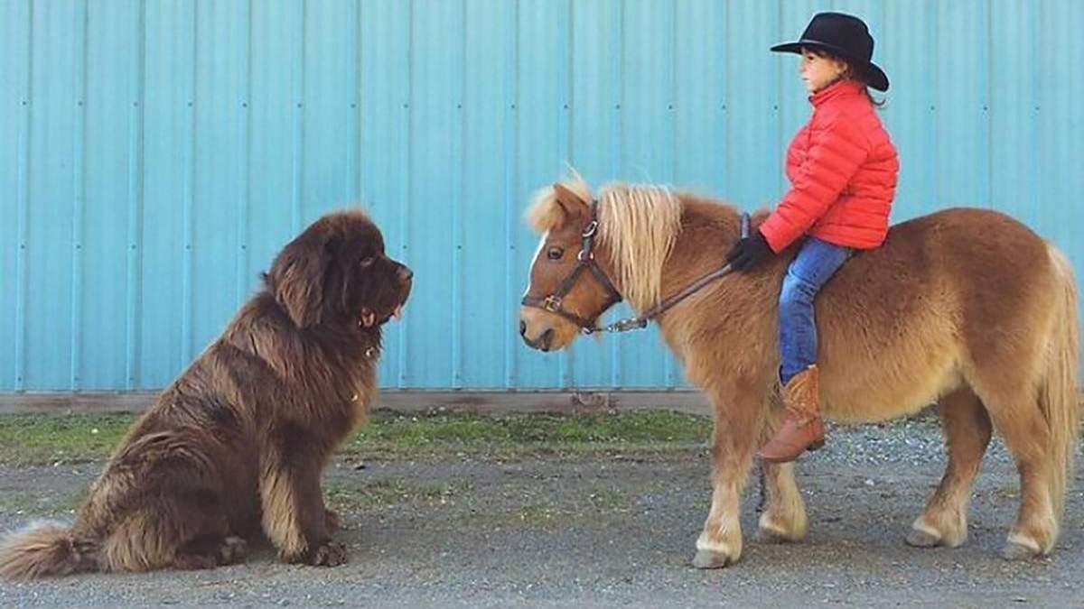 10 собак, которые не понимают насколько они большие