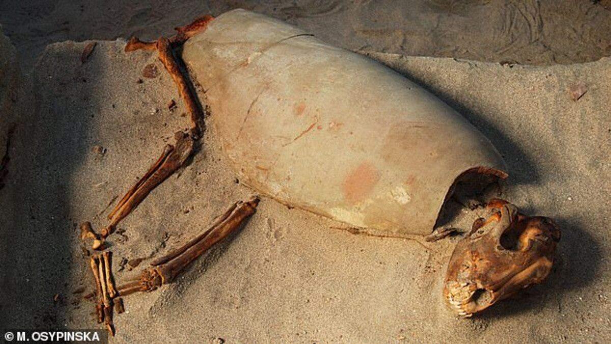 Найстаріше кладовище домашніх тварин знайшли у Єгипті