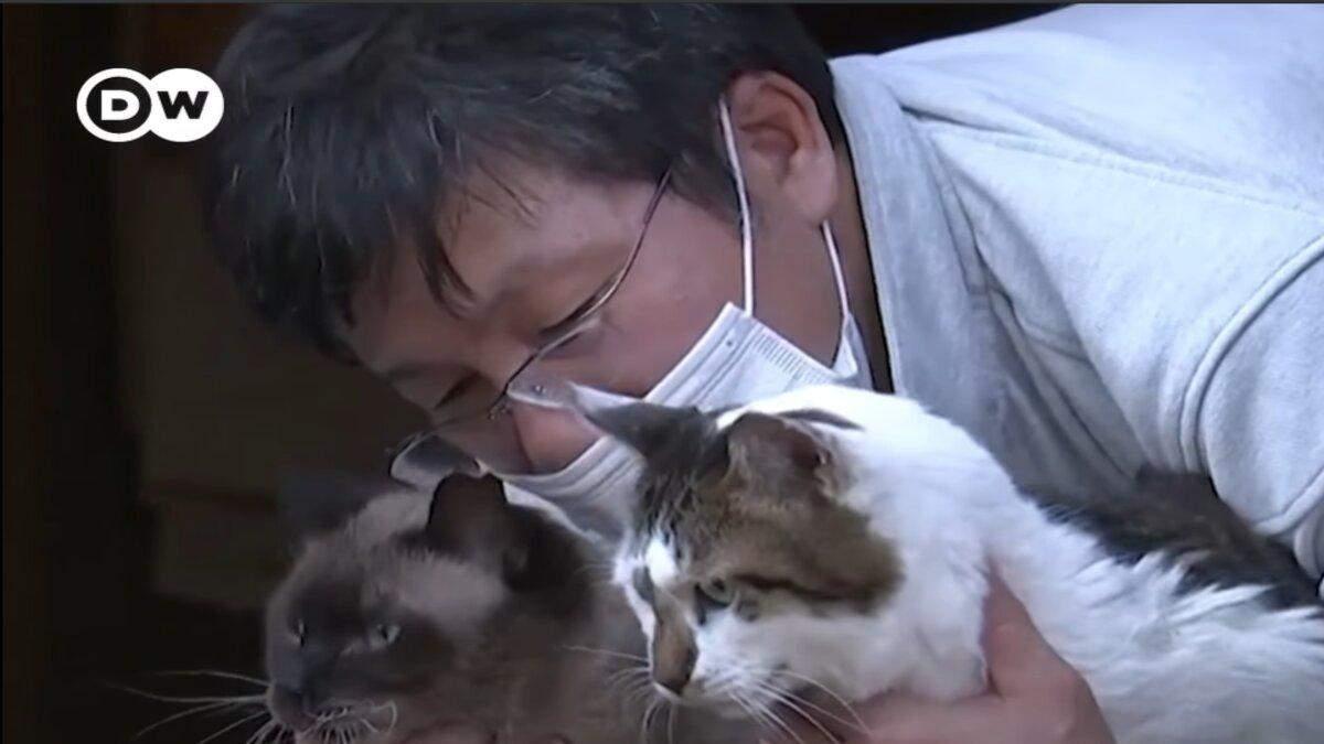 Японец заботится о брошенных кошках в Фукусиме: видео