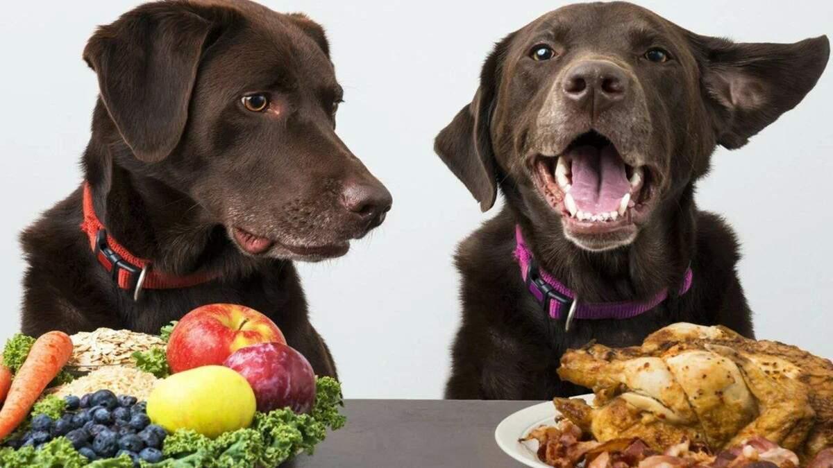 Небезпечна їжа: 7 продуктів з вашого столу, які не можна давати собакам