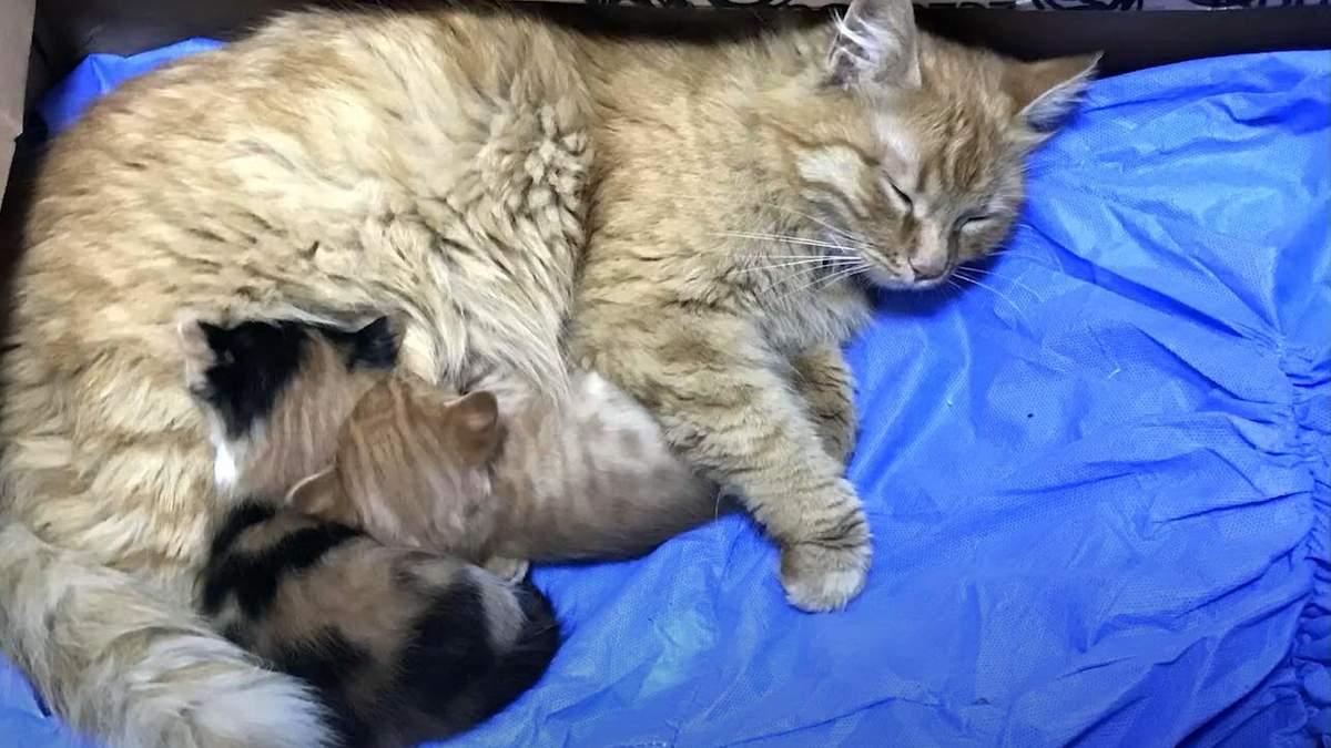 В Турции кошка принесла врачам своих больных котят: видео