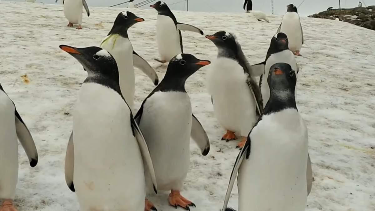 Можно ли касаться пингвинов и подходить к ним вплотную