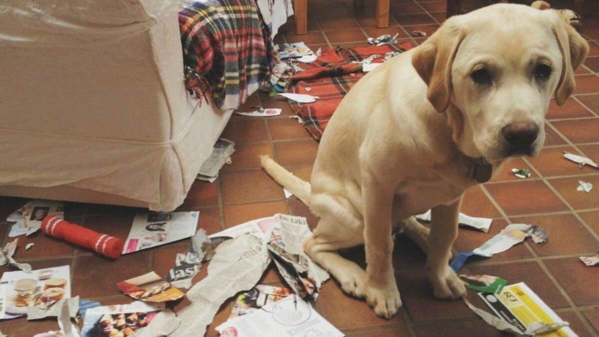 Чи є у домашніх тварин погані звички: що говорить зоопсихолог