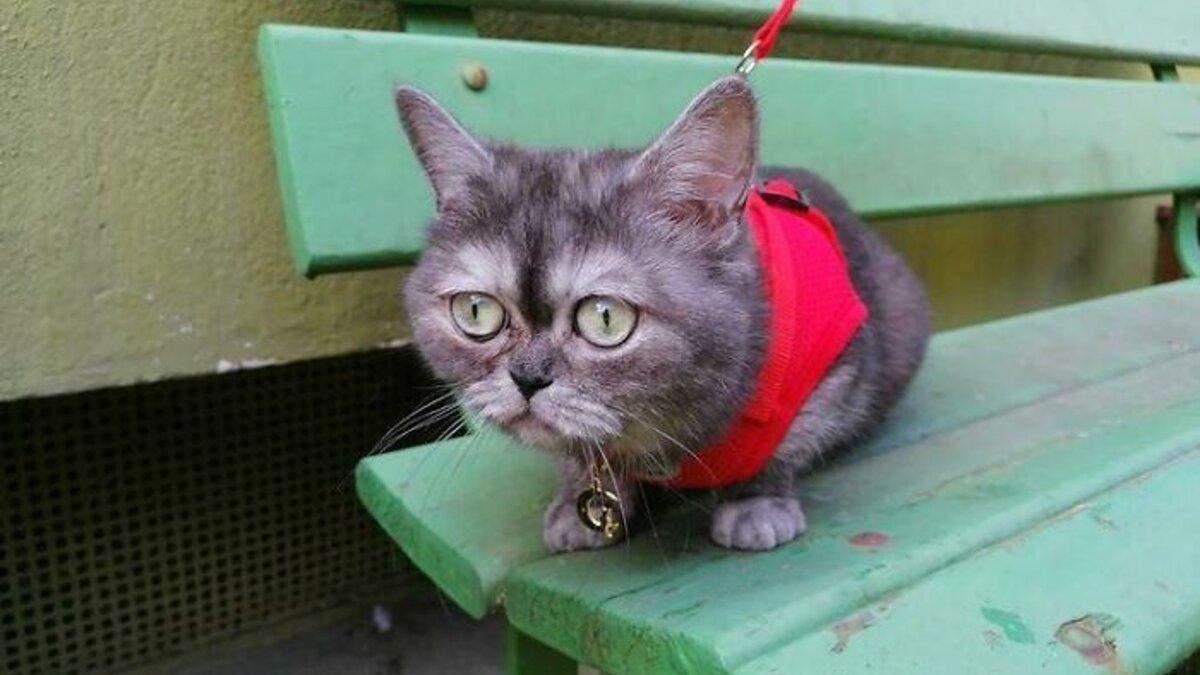 Кішка з сумною мордою: милі фото й щаслива історія