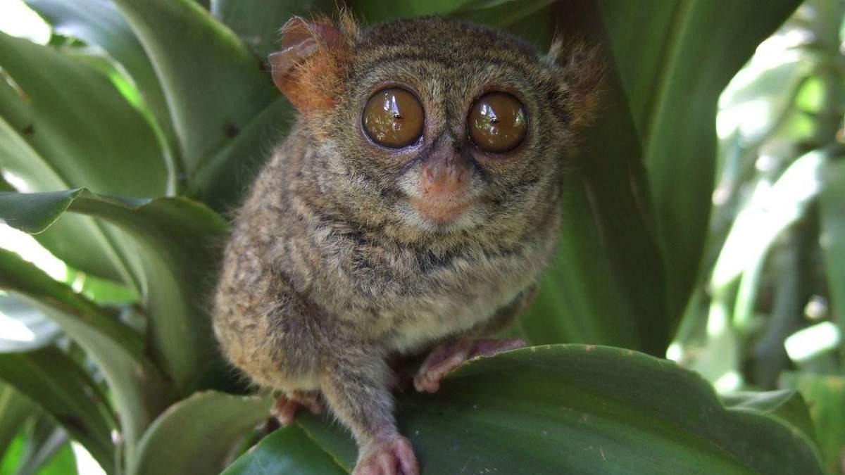 Рейтинг 20 найбільш рідкісних тварин у світі: фото, характеристика й опис