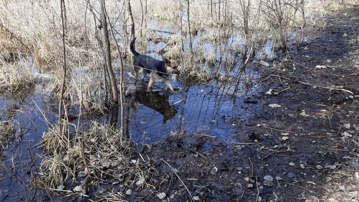 Убирает за людьми: в Сумах умная собака чистит реку от мусора