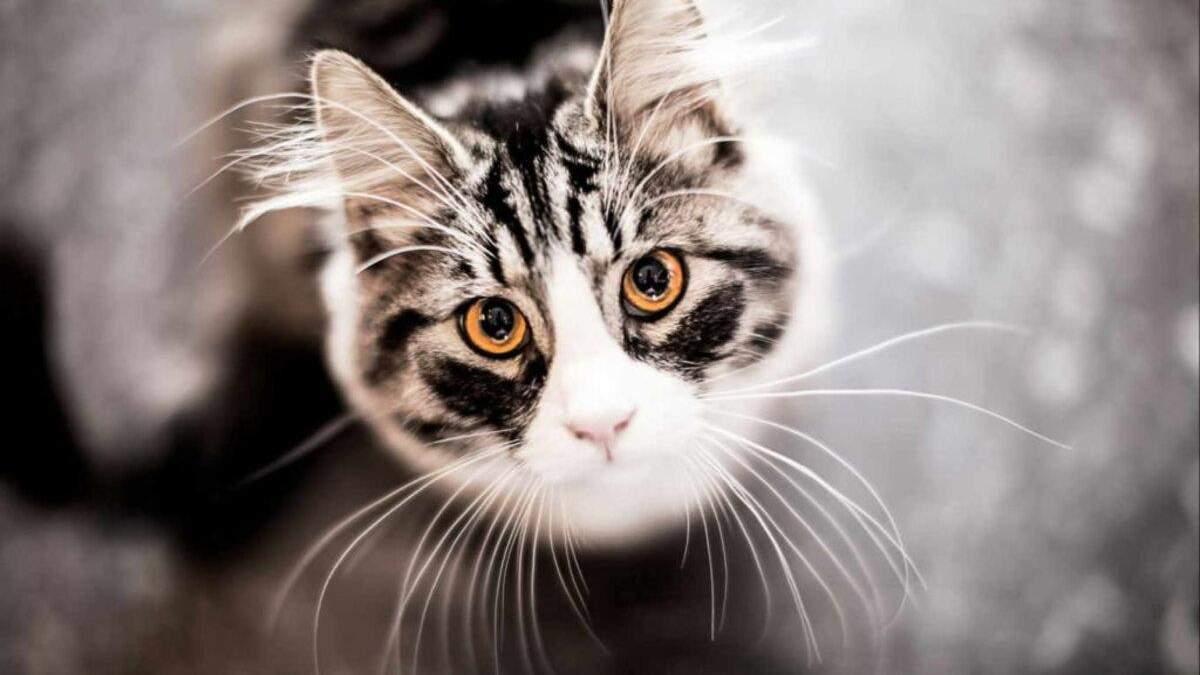 Зачем кошкам усы: интересные факты о любимцах