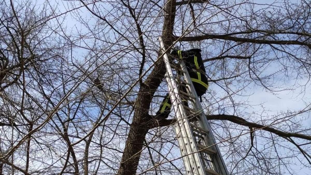 """Пожарные спасли """"кота-маугли"""", который застрял на дереве"""