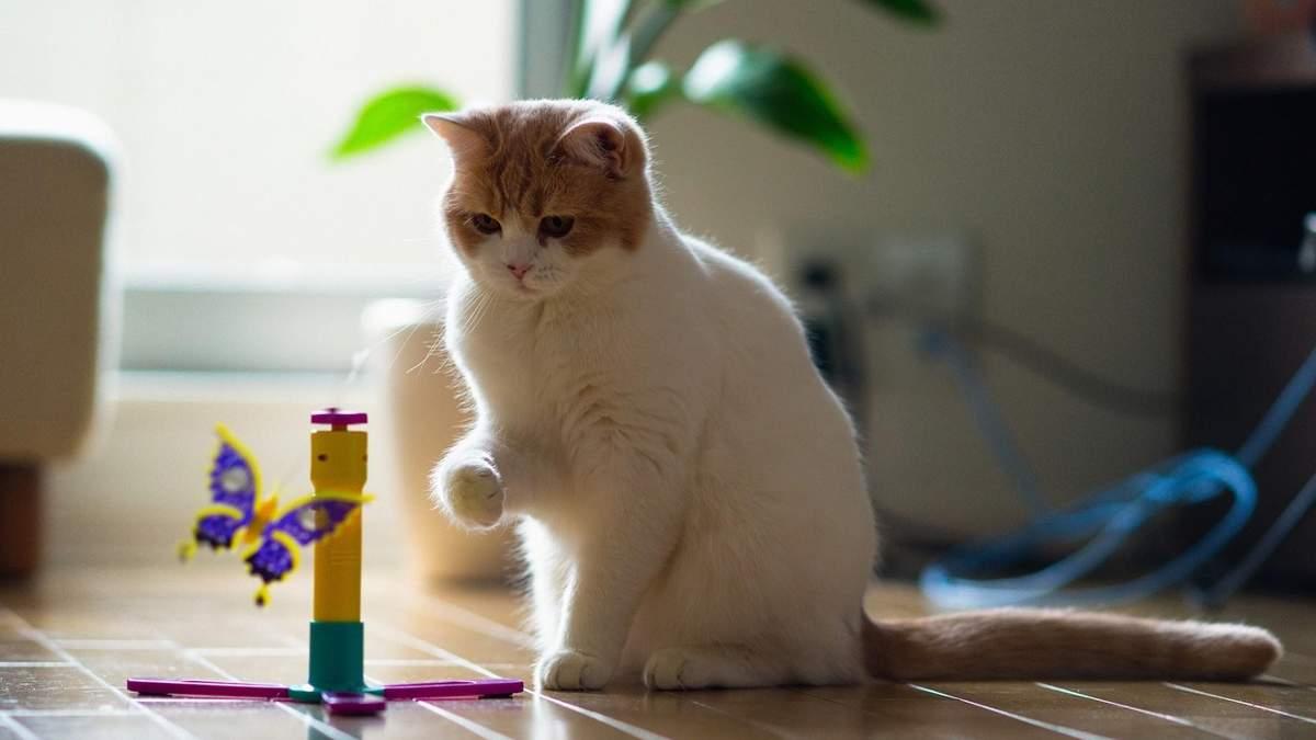 Якщо у вас є кіт: 6 геніальних порад для господарів
