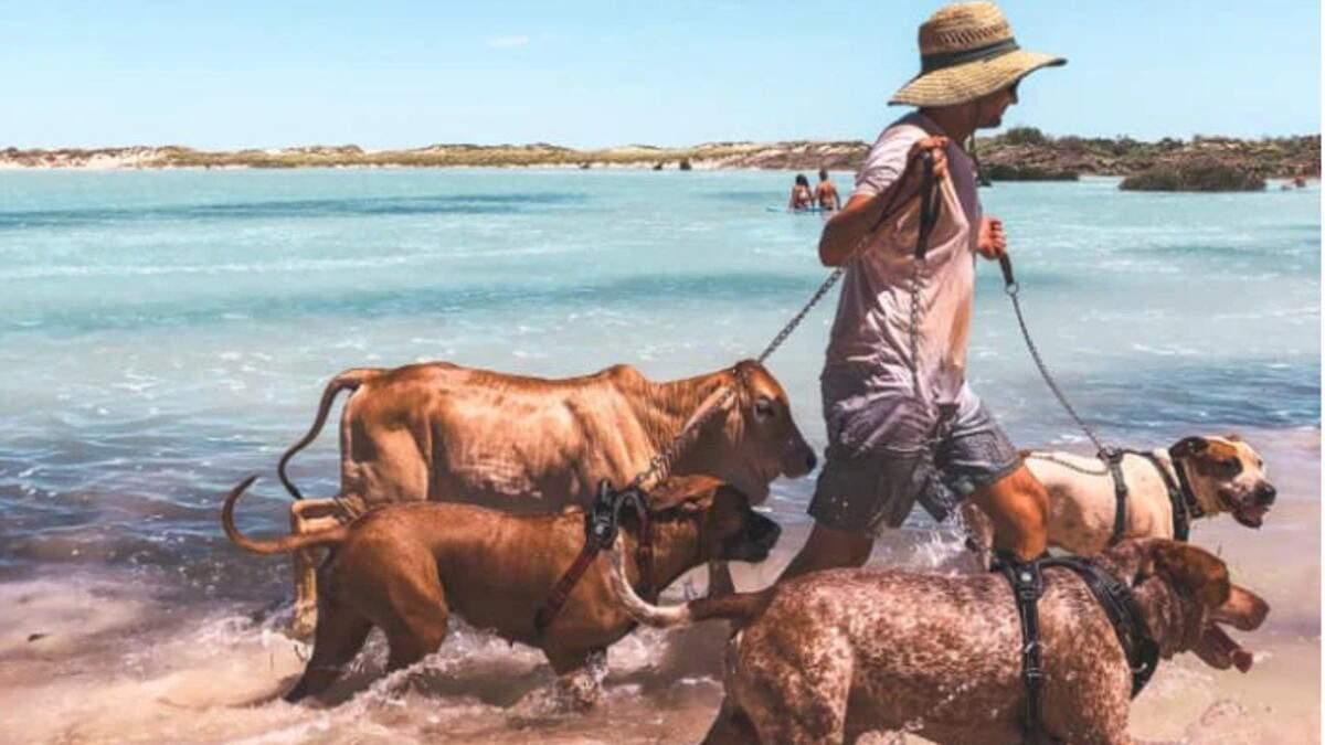 Плавает в океане и гуляет на поводке: почему теленок считает себя собакой – милые фото и видео