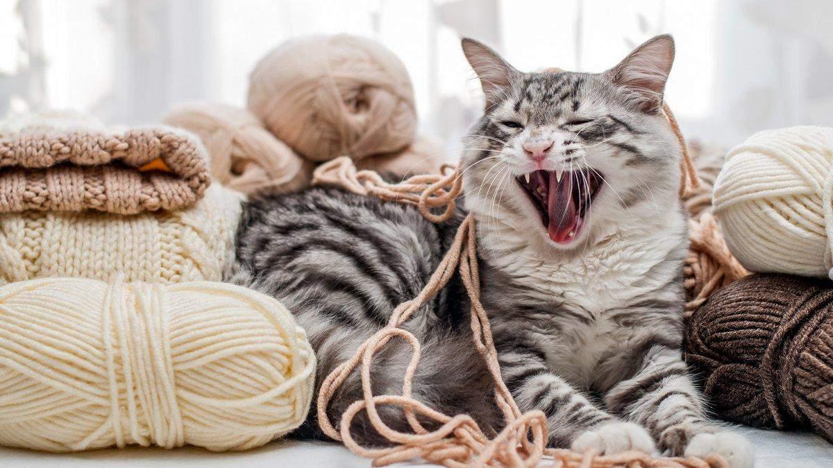 Як зробити кішку ласкавою та доброю: поради власникам