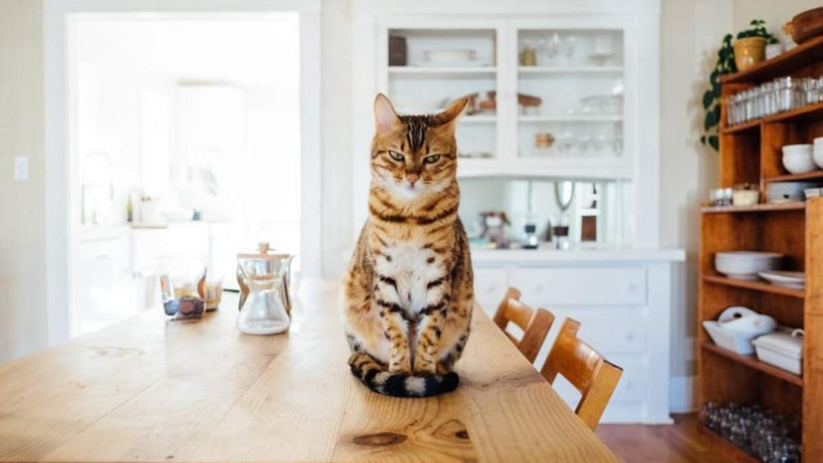 Які продукти не можна давати котам