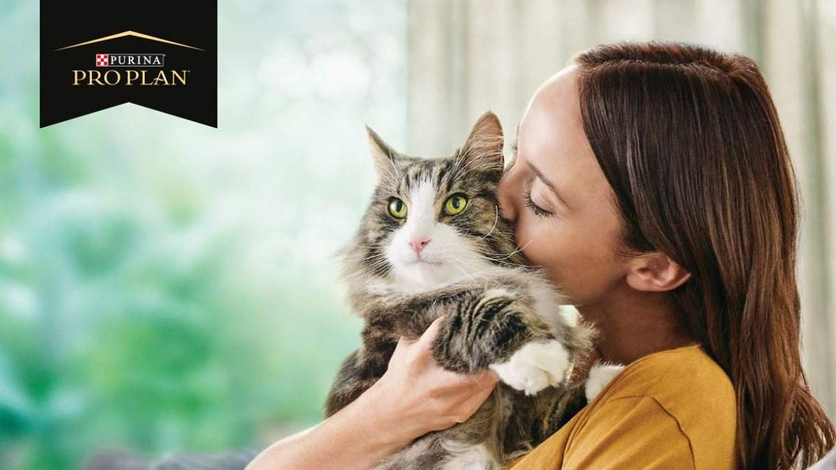 Аллергия на шерсть кошек: как с помощью корма для кошек можно нейтрализовать* аллерген