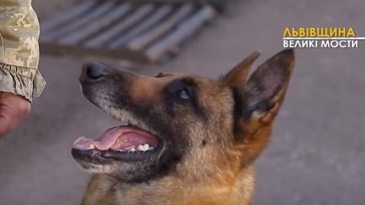 Как готовят собак-пограничников: секреты и интересные подробности – видео