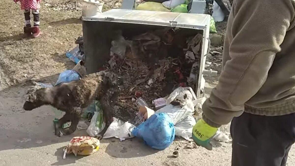 В Полтаве нашли собаку в мосорном баке и теперь ей ищут новый дом