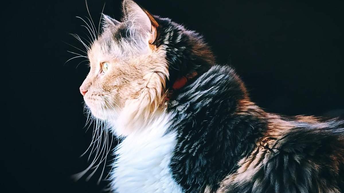 Вчені пояснили, чому коти не покарають кривдника свого господаря