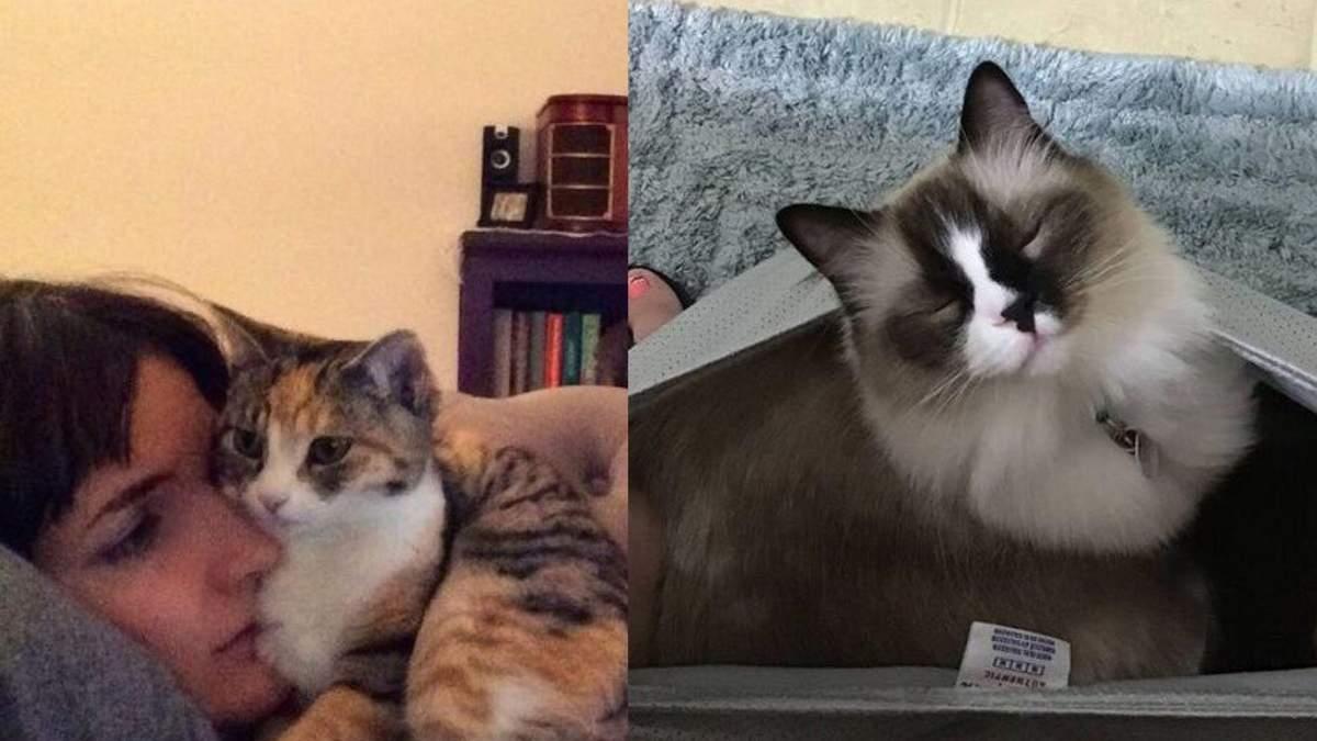 Наглецы года: этим котам можно все и даже больше – курьезные фото