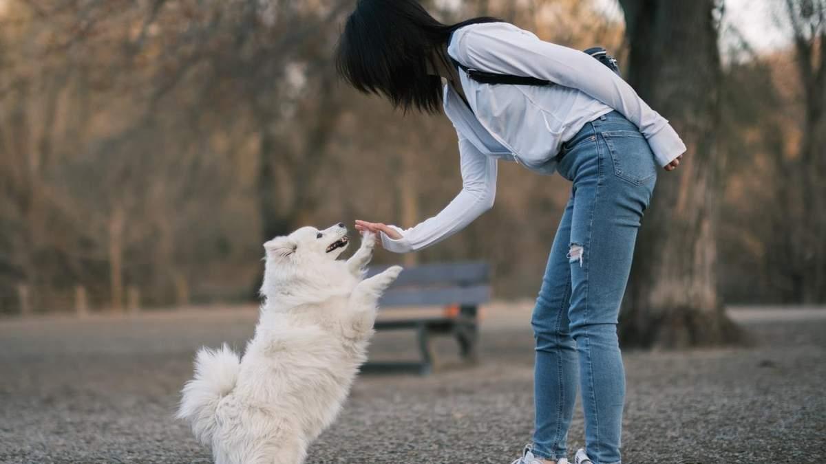 Чи можуть собаки ревнувати господарів: вчені дали цікаву відповідь – відео