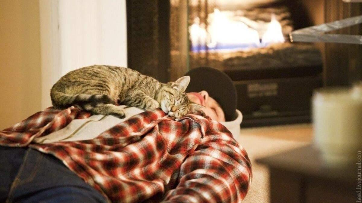 Почему кот ложится спать на вас: интересное объяснение