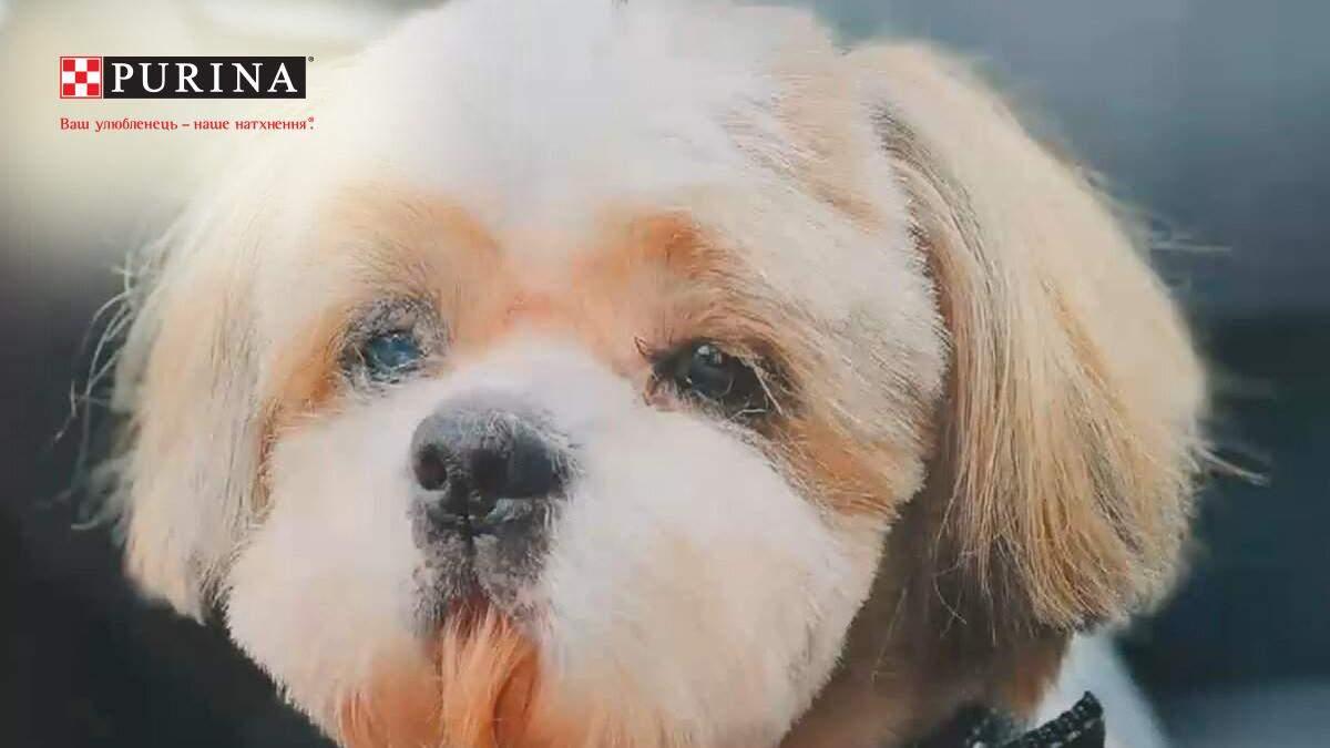 В Киеве бездомных собак отправляют в салон красоты: милые фото и видео