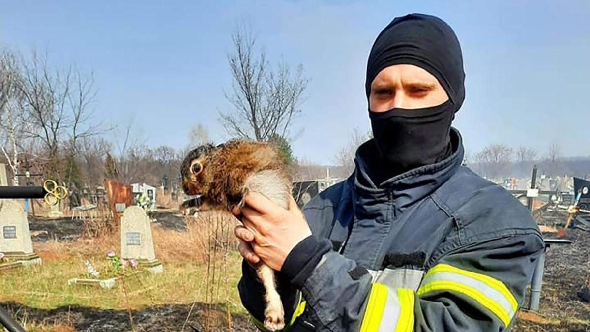 Дикі тварини у небезпеці: людей вкотре просять не палити суху траву