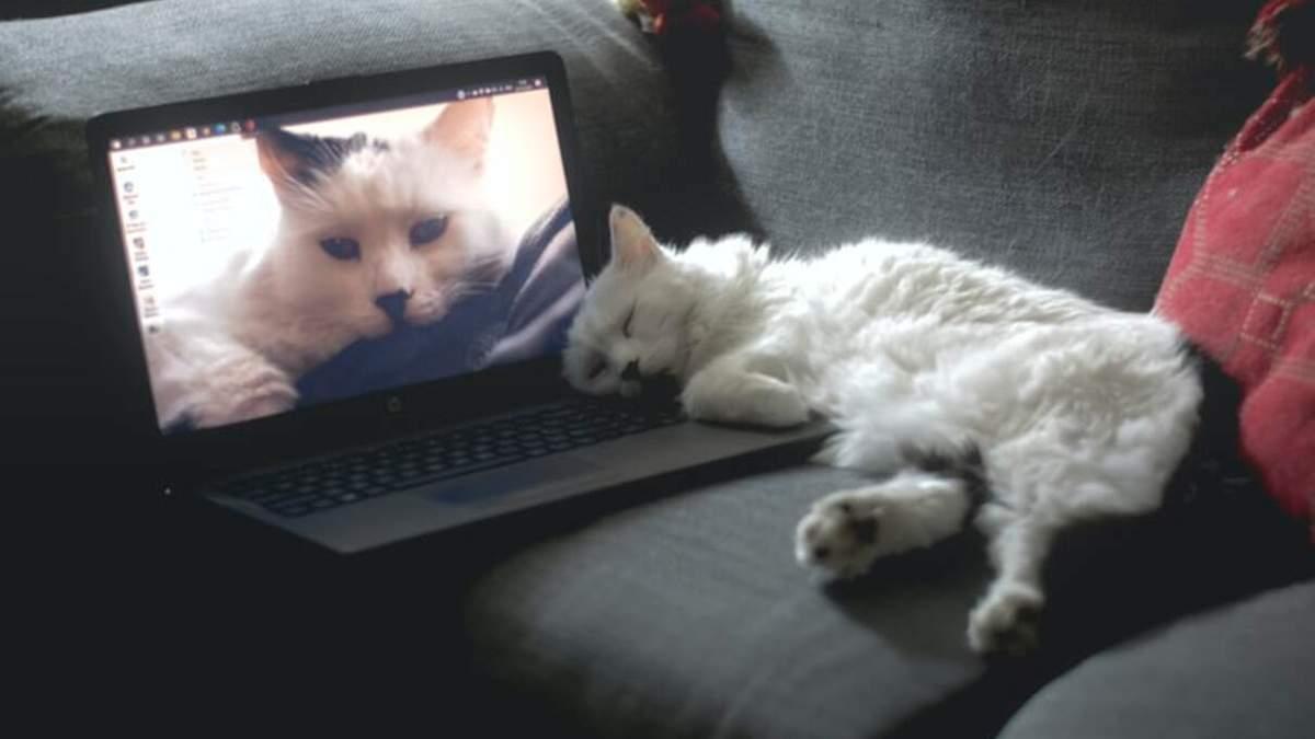Створили котобук для котів: з підігрівом і мишкою