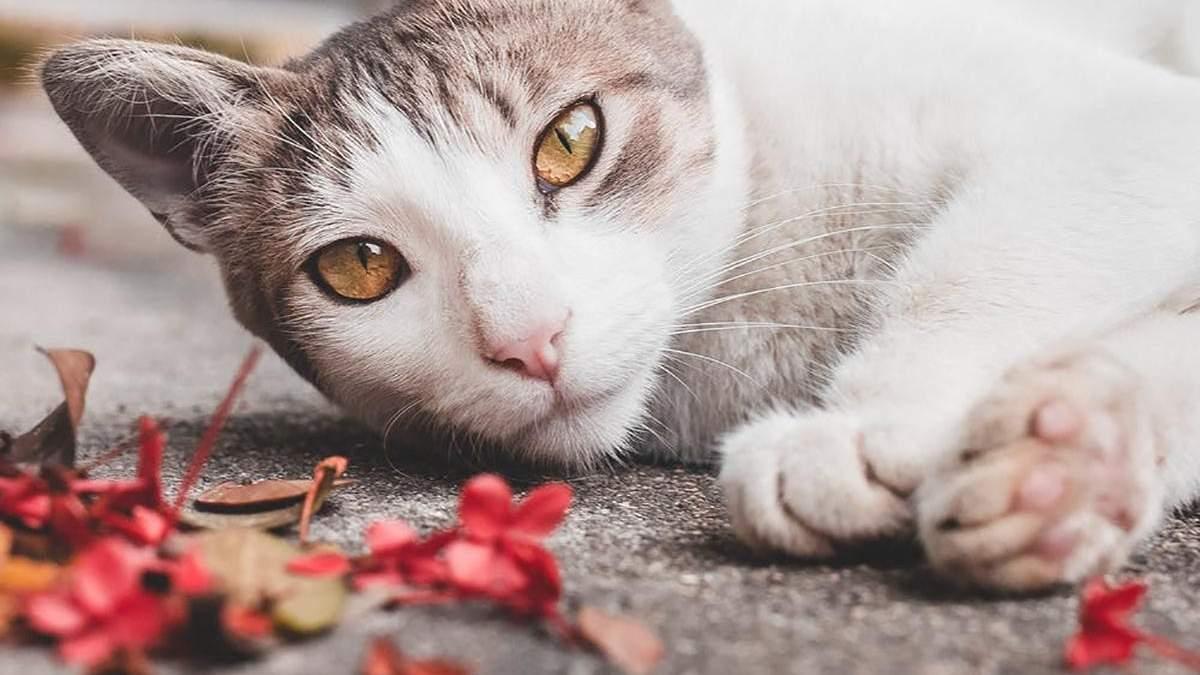 5 цветков в вашем саду, которые могут навредить кошке: перечень