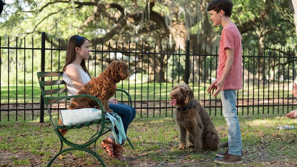 """Не """"Хатико"""" единым: 6 добрых фильмов о собаках"""