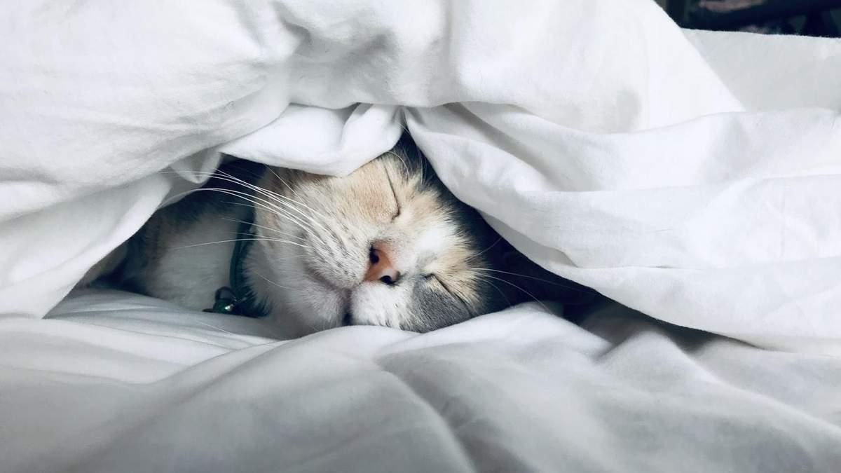 Чому кішки уві сні притискаються до хазяїна: цікаве пояснення