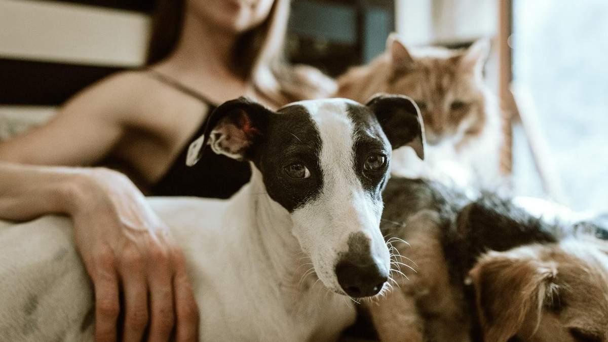 6 популярних міфів про домашніх тварин та ветеринарію